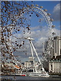 TQ3079 : London Eye by Rudi Winter