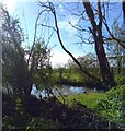 TQ6404 : Pond behind Pevensey and Westham Station by PAUL FARMER