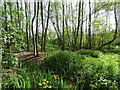 TQ3979 : Greenwich Ecology Park - alder carr by Stephen Craven