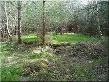 SK0016 : Rugeley Camp - Hut base by John M