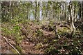 NT2268 : Trenches, Dreghorn Wood by Richard Webb