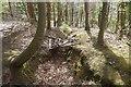 NT2268 : Trench, Dreghorn Wood by Richard Webb