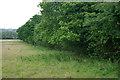 TQ2948 : Field edge of tree belt along Canada Road by Robin Webster