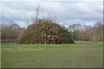 TQ2066 : Dome shaped bush by N Chadwick
