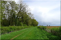 SK9202 : Bridleway past Wymark Spinney by Tim Heaton