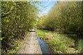 NZ3842 : Boardwalk on old railway path by Trevor Littlewood