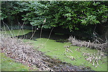 TR2257 : A Eutrophic pond by N Chadwick