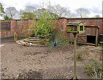 SD8304 : Heaton Park Animal Centre - Ducks, Geese and a Peacock by David Dixon