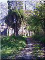 SN0215 : Path to St John's Church, Slebech - now closed by welshbabe