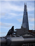TQ3280 : Shard and Pigeon by Rudi Winter