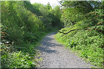 SX9066 : Path in Nightingale Park by John C