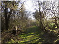 SN6572 : Bridleway to Tynreithin, Coed Alltfedw by Rudi Winter