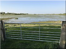 TL5392 : Gate to the washes near Suspension Bridge - The Ouse Washes by Richard Humphrey