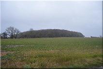 TR2255 : Frith Wood in heavy rain by N Chadwick