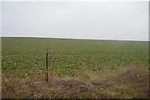 TR2254 : Crops by N Chadwick