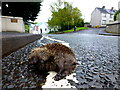 H4572 : Dead hedgehog, Kelvin Road, Omagh by Kenneth  Allen