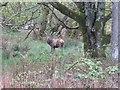 NR4863 : Red deer at Cabrach by M J Richardson