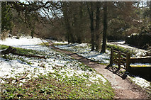 SX8963 : Path down Cockington valley in the snow by Derek Harper