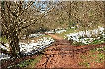 SX8963 : Torbay-Totnes Trail, Cockington valley by Derek Harper
