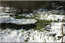 SX8963 : Snowy platform, Cockington valley by Derek Harper