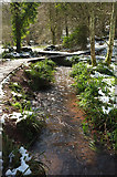 SX8963 : Cockington Stream in the snow by Derek Harper