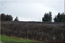 SX9779 : Raised railway line by N Chadwick
