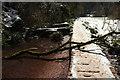 SX8963 : Fallen tree, Torbay-Totnes Trail by Derek Harper