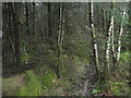 NR9188 : Dark forestry near Kames by M J Richardson