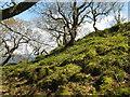 NR6689 : Woodland on Jura by M J Richardson