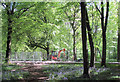 SP8908 : Bluebells and a JCB under the trees in Wendover Woods by Chris Reynolds