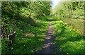 SJ7824 : Shropshire Union Canal milepost at Rue Hill by Mat Fascione