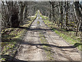 NH6153 : The worst road on the Black Isle? by valenta