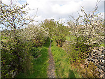 SD9771 : Lovers Lane, Kettlewell by Stephen Craven