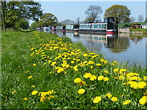 SJ7626 : Towpath along the Shropshire Union Canal by Mat Fascione