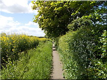 TF1505 : Footpath between Lincoln Road and Welmore Road, Glinton by Paul Bryan