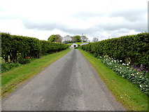 H5064 : Neat hedges and verges, Moylagh by Kenneth  Allen