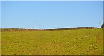 SX4268 : Field by Tamar Valley Line by N Chadwick