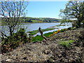 J0923 : Mud banks colonised by grass in the Newry River estuary : Week 20