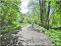 SK0642 : Alton, railway trackbed by Mike Faherty