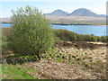 NR4272 : Roadside Rowan near Bunnahabhain by M J Richardson