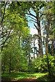 SX9999 : Sprydon Plantation by Derek Harper