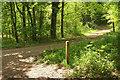 SX9999 : Track junction, Ashclyst Forest by Derek Harper
