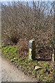 SX3670 : Florence Tomkin Plantation by N Chadwick