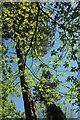 SX9264 : Leaves, Warberry Copse by Derek Harper