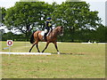 SJ8065 : Louise Chell and Willy Wiz in the dressage by Jonathan Hutchins