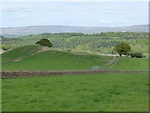 NY5537 : Eden valley by Oliver Dixon