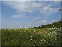 TL2732 : Field by Warren Lane, Clothall by David Howard