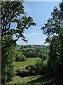 SU9941 : Winkworth Arboretum - Trees and fields by Rob Farrow