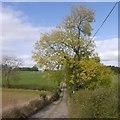 SO6662 : Road to Poswick by Richard Webb