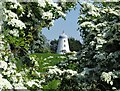 SE5314 : Old windmill framed by hawthorn blossom by Neil Theasby